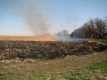 Burning pasture land