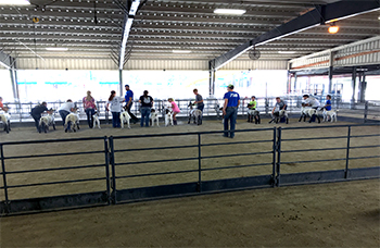 4-H Goat and Lamb Clinic