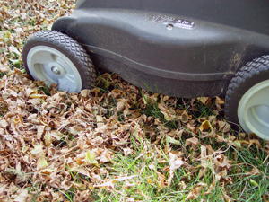Lawn mower mulch mowing dried leaves