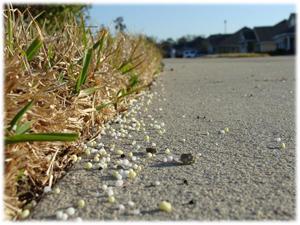 Fertilizing Cool Season Lawns