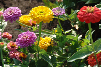 Defining Sun Requirements For Plants