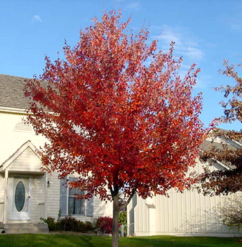 Tree Selection For Kansas City Avoid These Mistakes