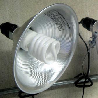 Lighting Options For Starting Seed Leds Vs Fluorescent